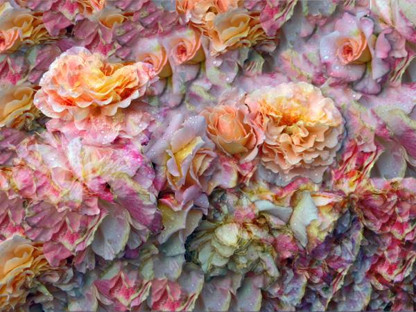 ELISABETH RASS, DES MEERES UND DER LIEBE WELLEN, Serie WALTZ OF ROSES, 2013